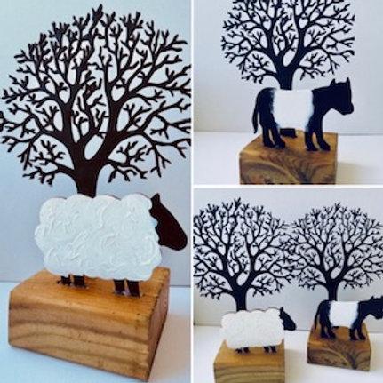 Beltie Coo & Sheep