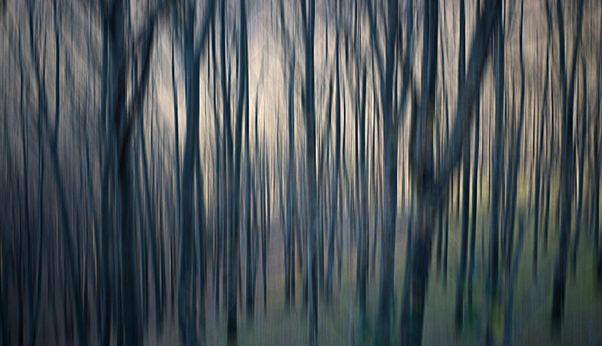 La forêt dense