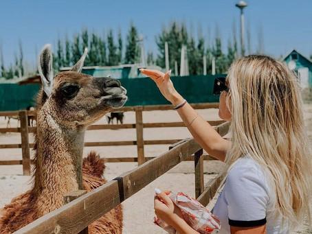 """🦙 На Арабатке есть """"Сафари парк"""", небольшой зоопарк. Находится он между Счастливцево и Стрелковым."""
