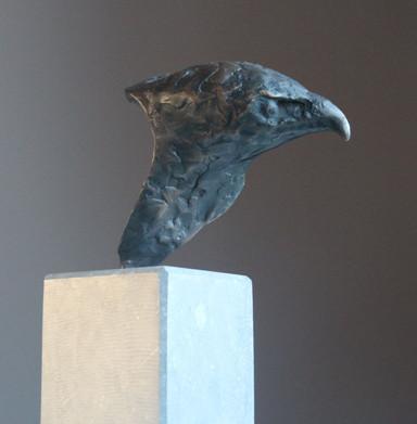 Head of readhawk