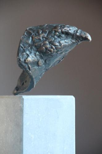 Head of falcon