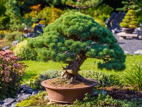 Rostliny vhodné pro japonské zahrady: