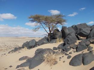 砂漠のお話をします 🌙