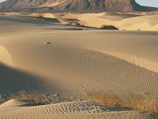 恋する砂漠:砂漠のお話をします 🌙