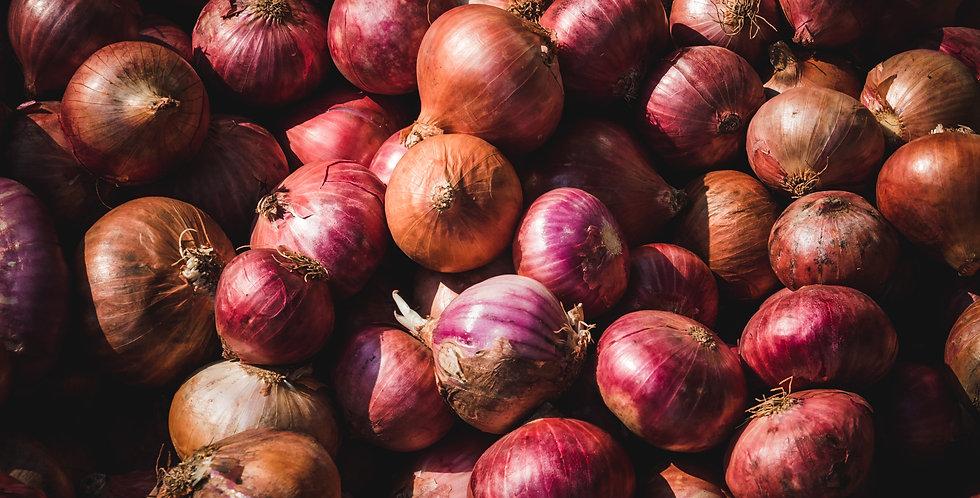 Onion Starts
