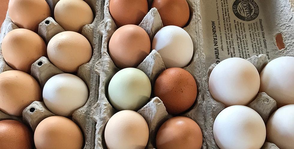 1 Dozen Local Chicken Eggs