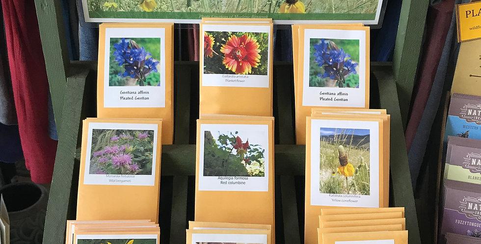 Nurture Natives Wildflower Seeds (Paradise Valley)