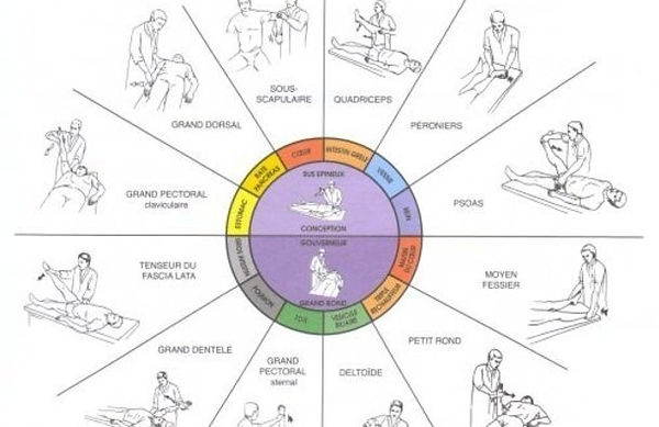 exercices, sante, toche, muscles, poumon, coeur, estomac, meridien, rate, reins, fessier, pectoral deltoide, dentele, dorsal, dos, back, quadriceps, abdominaux, sport, sou scapulaire, vessie, aducteurs, triple rechauffeurs, triple foyers, medecine, chinoise, foie, psoas, maitre coeur, gros intestin, vesicule biliaire, metal, feu, bois, eau, intestin grele, terre, alternative, complementaire, therapie, soins, kinesiologie, aimer, amour, love, esprit, corps, meditation, emotion, organe, ame, homeostasie, santé, massage, colère, guerir, homeopathie, nature, naturel, therapeute, racines, ciel, comprendre, resilience, avancer, avant, go, happy, joe, bonheur, heureux, hakuna matata, carpe diem, negatif, positif, depression, plante, mineraux, animaux, vegetarien,vegan, lien, link, therapist, healt, touch,