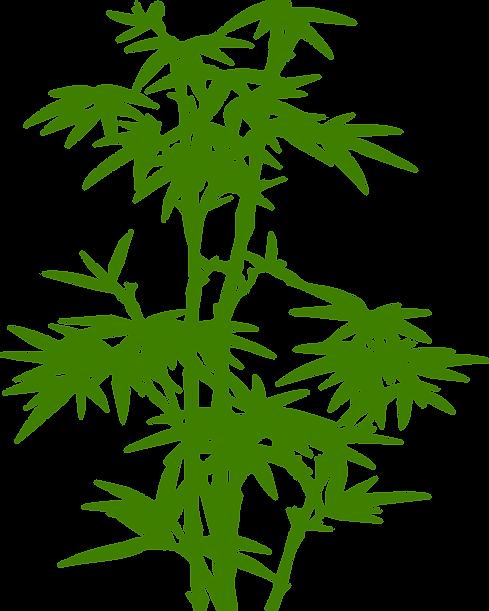 bamboo-310949.png
