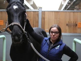 Наука и искусство содержания возрастных лошадей!
