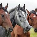 Есть ПЕРВАЯ СОТНЯ ОНЛАЙН участников Евразийского Ветеринарного Конного Конгресса 30-31 июля!