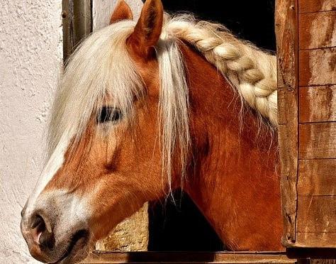 ОБНОВЛЕНА ПРОГРАММА Евразийского ветеринарного конного конгресса MAXIMA VET