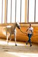 MAXIMA VET: Ветеринарная выводка