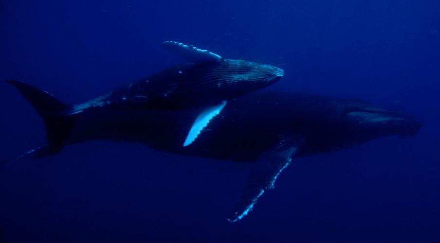 Animals_whales.jpg