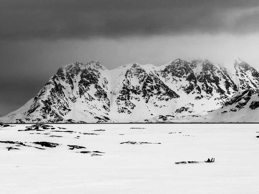 Dog sled in a Greenland Landscape
