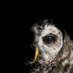 Photographing Wildlife