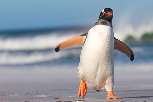 Penguin iStock_86621789_XLARGE copy.jpg