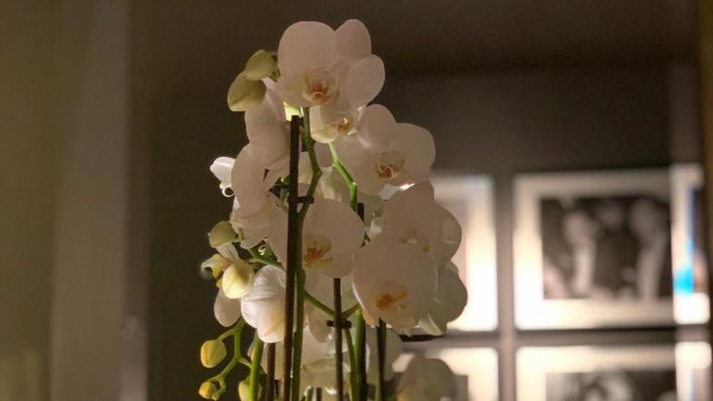 Giraffe Flowers - Corporate Floristry 22