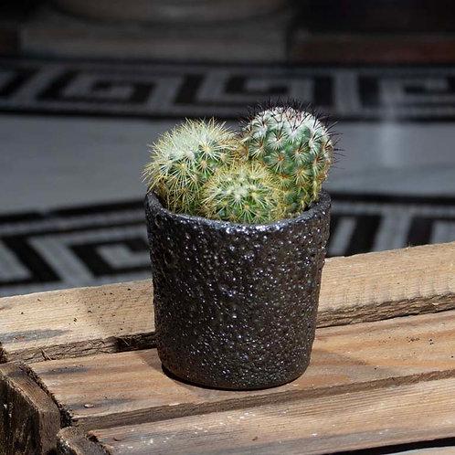 Mini Cactus in Charcoal Pot