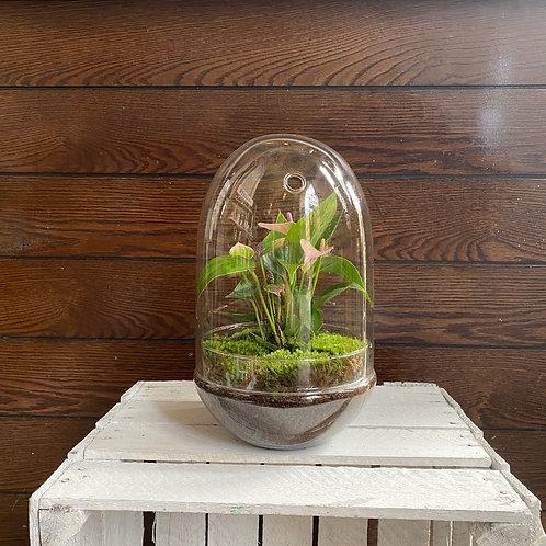 Anthurium in Terrarium