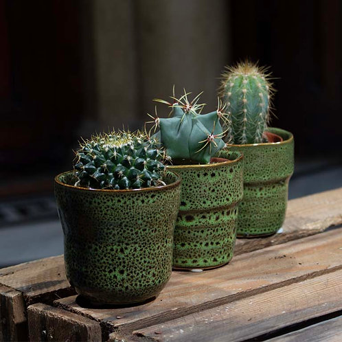 Mini Cactus in Green Pot