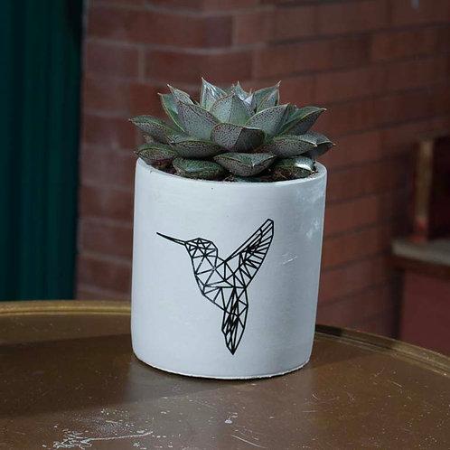 Medium Succulent in Hummingbird Pot