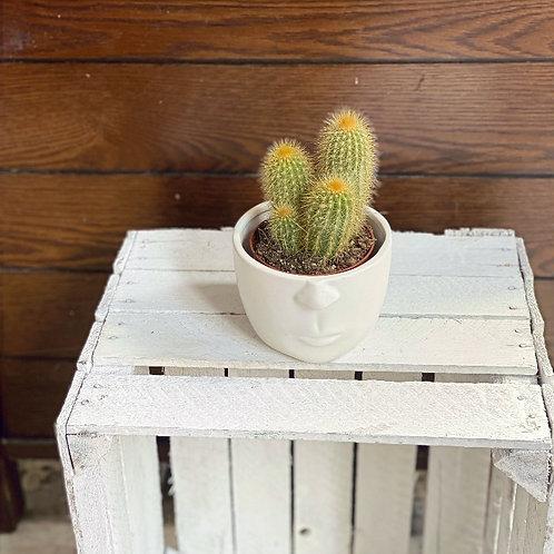 Cactus in Face Pot