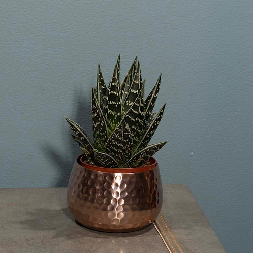 Aloe Tiki in Copper Metal Pot