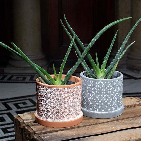 Aloe Vera in Cement Pattern Pot