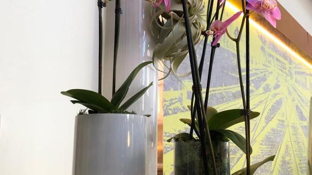 Giraffe Flowers - Corporate Floristry 5.