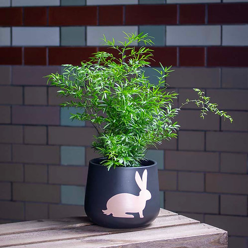 Fern in Black Bunny Pot