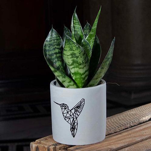 Snake Plant in Cement Hummingbird Pot