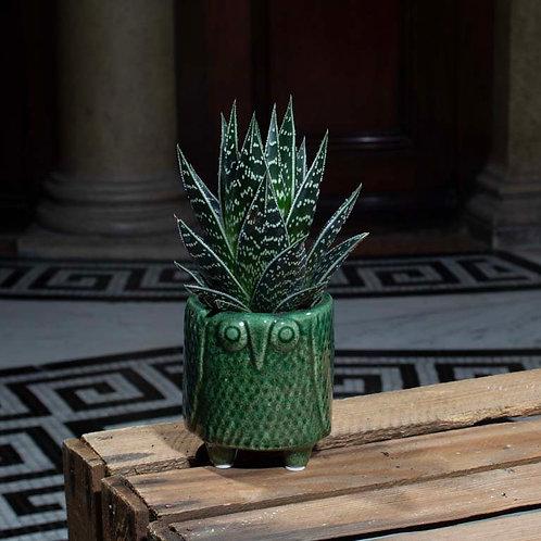 Aloe Tiki in Owl Pot