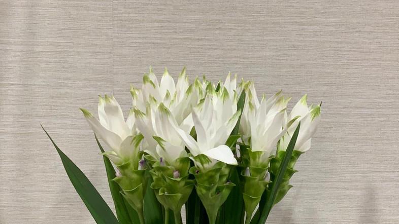 Giraffe Flowers - Corporate Floristry 18