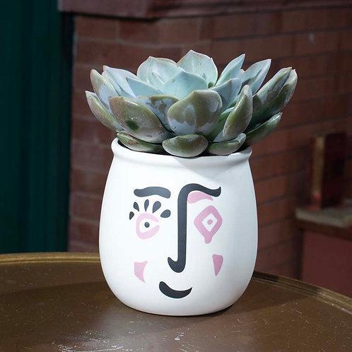 Medium Succulent in Painted Pot