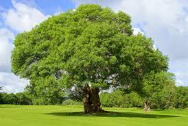 Silentii (13) : Wenn du stehst, bist du wie ein Baum ...