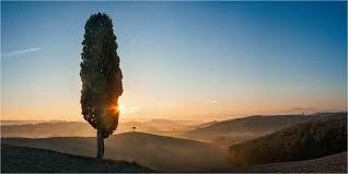 Silentii (7) : Die alte Zypresse