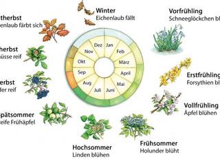 Jahreszeiten (2) : Phänologischer Kalender