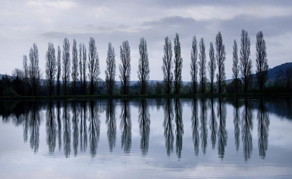 Poplar reflections.jpg