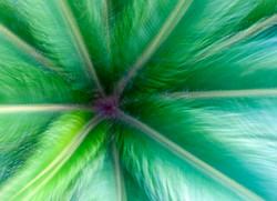 Tree fern.jpg