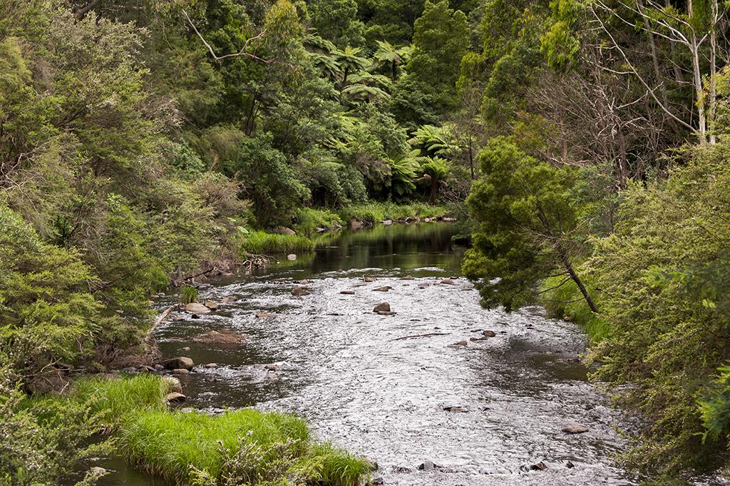 Yarra River, Warburton.jpg