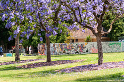Edinburgh Gardens, Melbourne.jpg