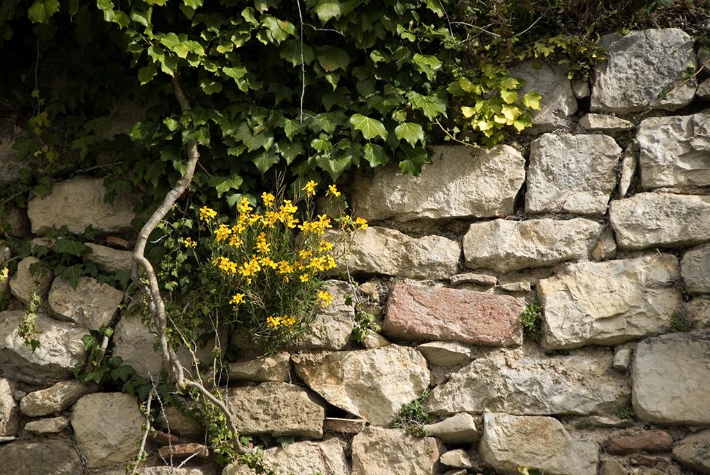 Stone wall, France.jpg