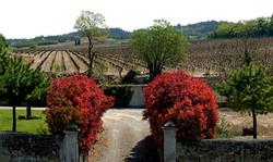Carcassone vineyard.jpg