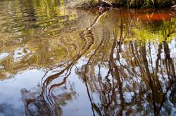 Noosa River reflections 1.jpg