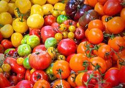Tomatoes galore.jpg