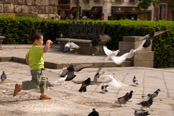 Pigeon chaser.jpg