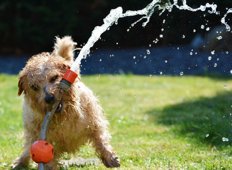 Staying Cool in the Summer Heat: Tips for Humans & Their Canine Companions
