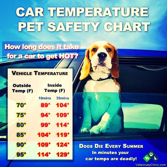 Car temperature safety