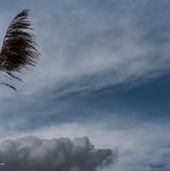 Piume al vento 01-05-20.jpg